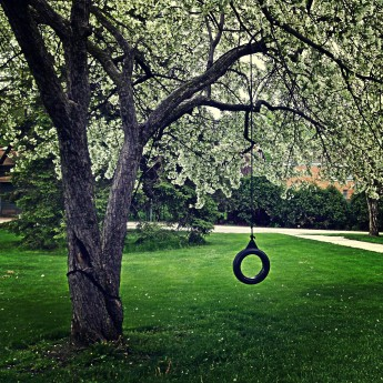 5.1.16 ~ tree with tire