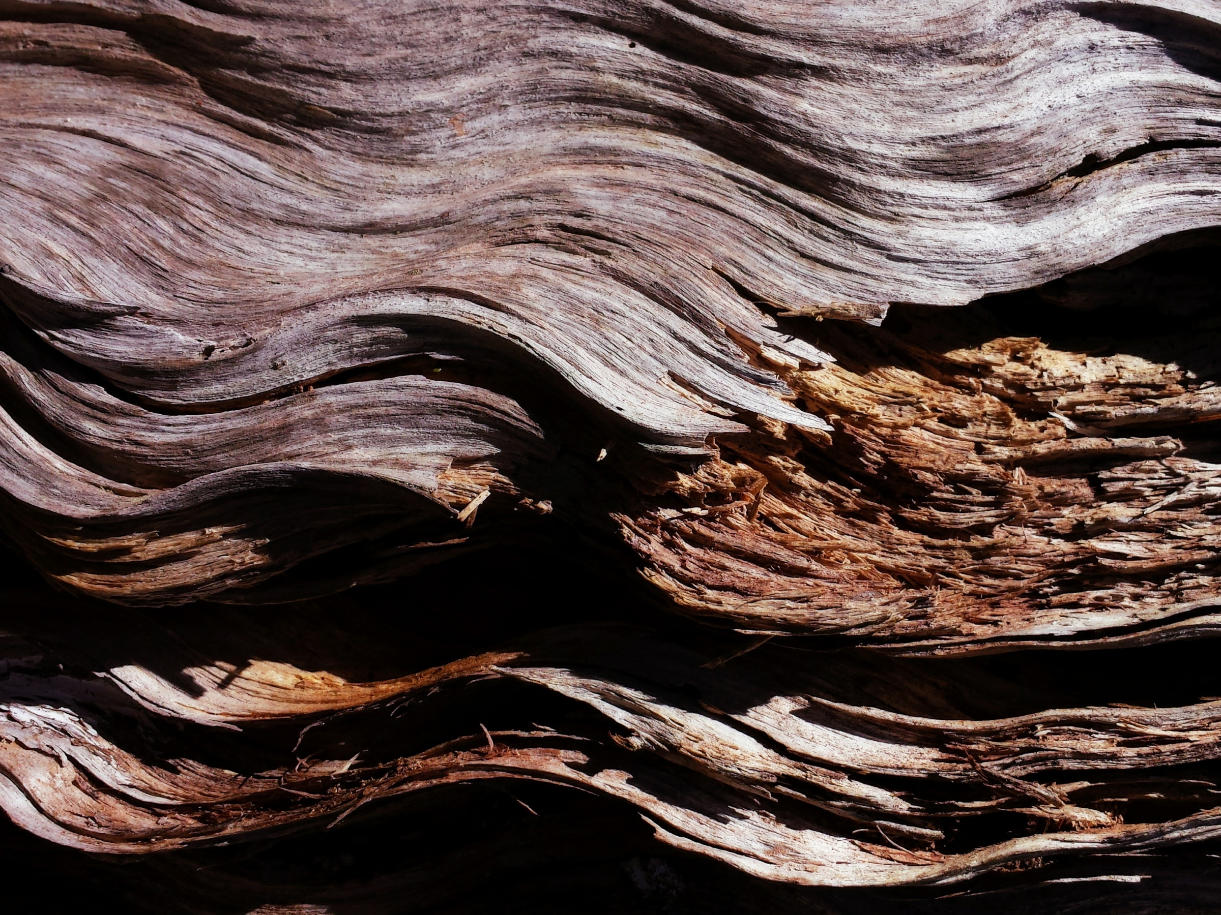 swirled bark from fallen tree