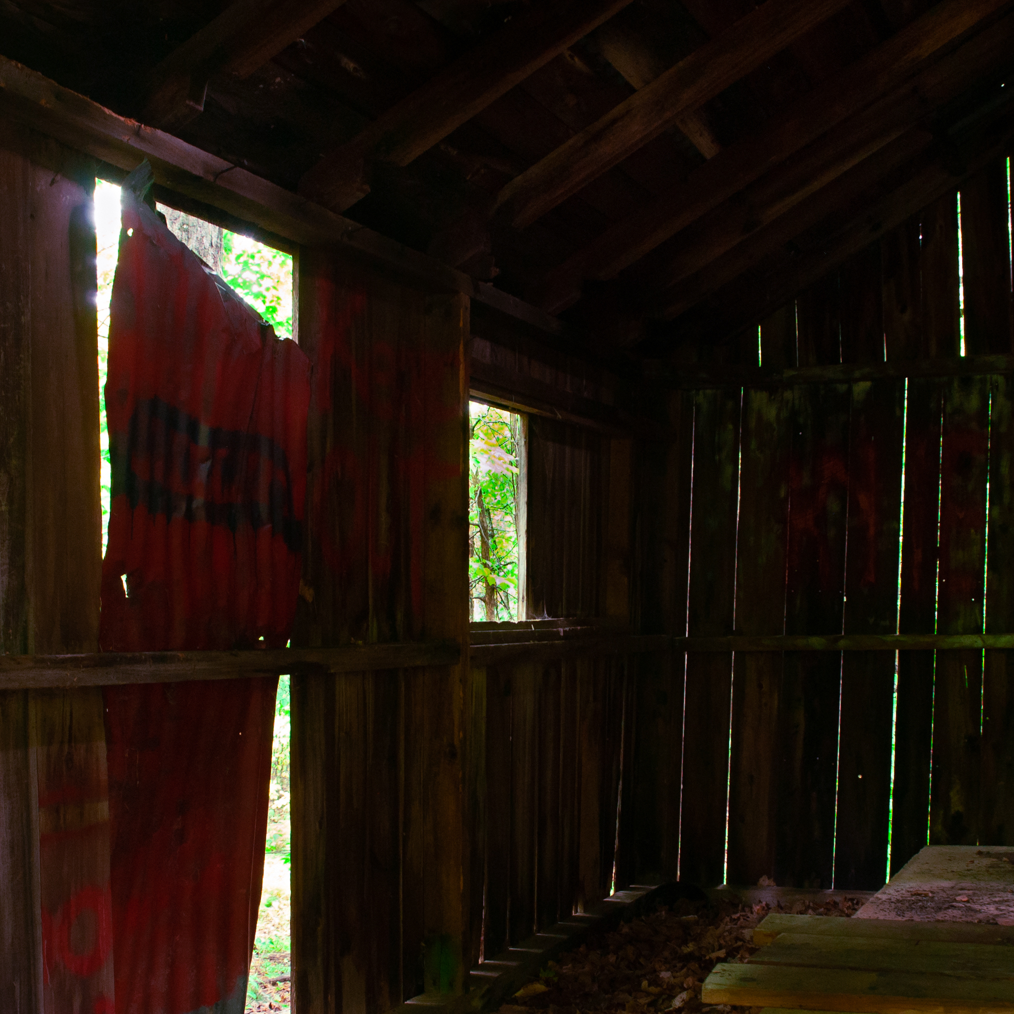 old barn where forest shows through gaps in the boards