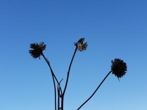 12.30.18 - spent bloom