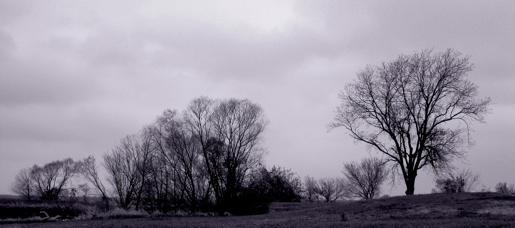 leafless winter tree silhouettes against a cloudy sky