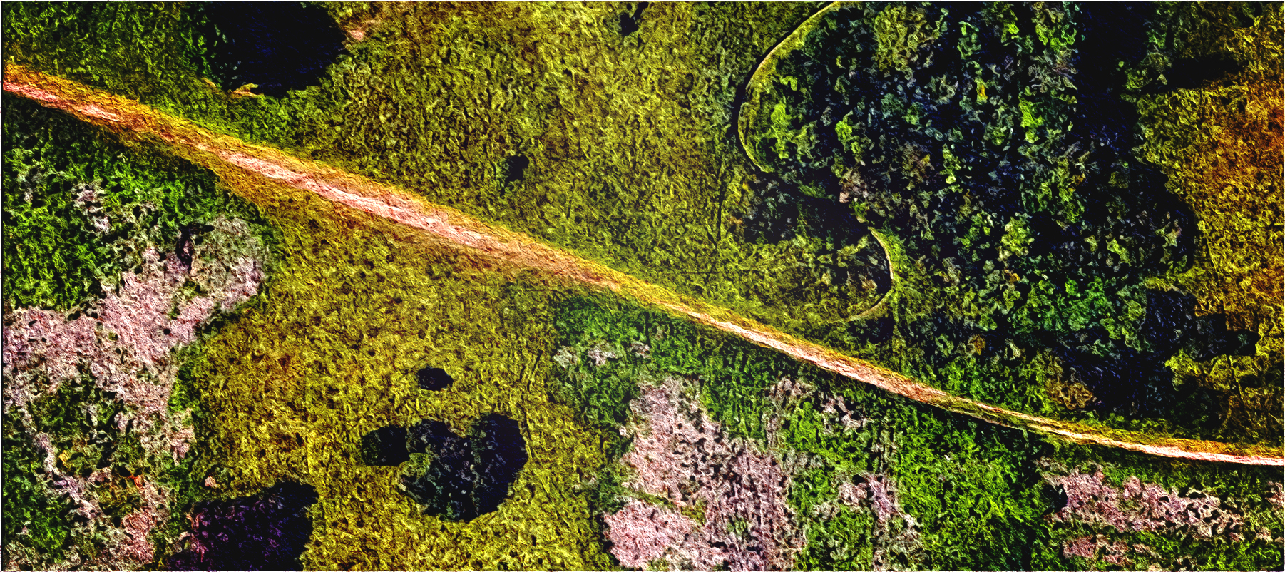 stylized overhead photo of a woodland trail