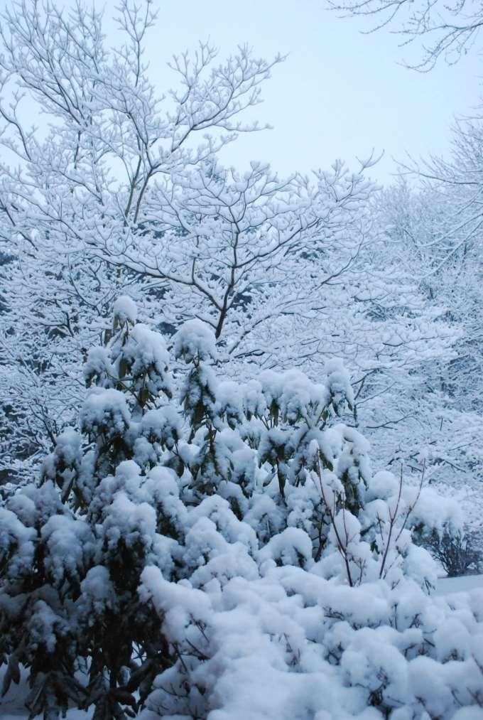 4334146660_9861a04f39_o_snow